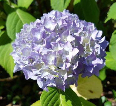 Flower, Nature, Plant, Flowers, Garden, Petal