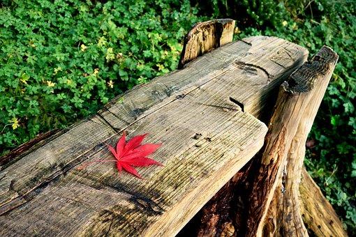 Bench, Log Bench, Seat, Park, Outdoor Furniture, Leaf