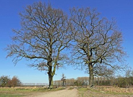Münsterland, Bridge Brook, Trees, Landscape, Nature