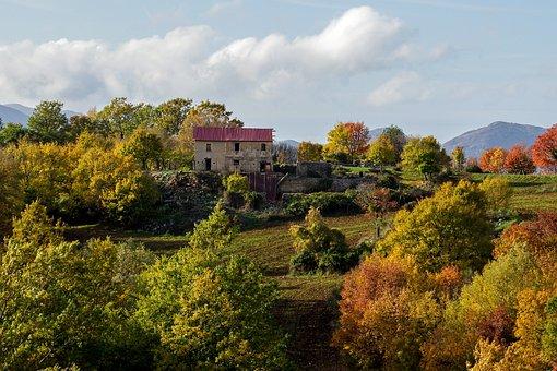 Restructure, Rebuild, Restore, Cottage, Nature, Tree