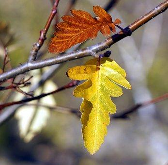 Leaf, Autumn, Outdoors, Nature, Plant, Branch, Vivid