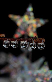 Drops, Star, Wet, Dew, Plant, Water, Macro