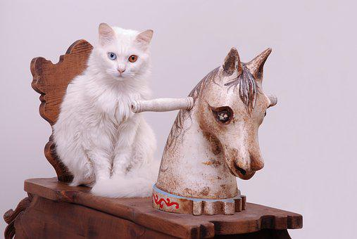 Cat, Blu, Rocking Horse, Animal, Domestic, Pet, Sit