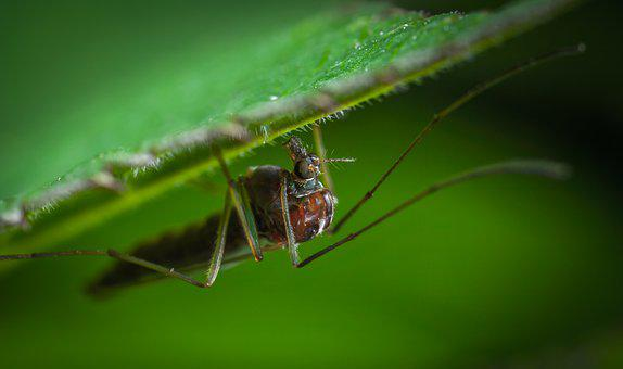 Insect, Nature, Animals, Living Nature, Macro