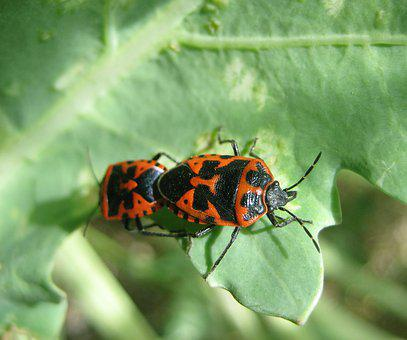 Insect, Beetle, Bug, Bugs, Red, Bright, Pattern, Nature