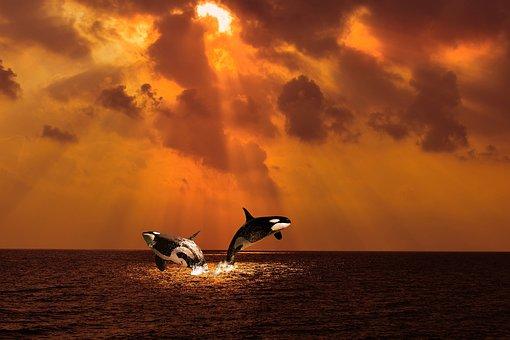 Orc, Sea, Cloud, Sun, Jump, Big Blue, Ocean, Water