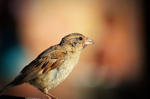 Bird, Wildlife, Nature, Animal, Outdoors, Cute