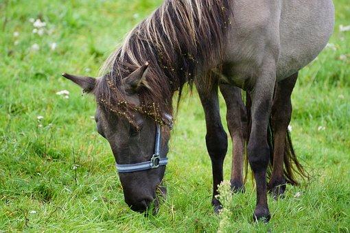 Animals, Farm, Field, Stallion, Village, Nature