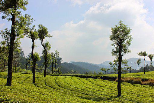 Landscape, Nature, Tree, Agriculture, Field, Kerala
