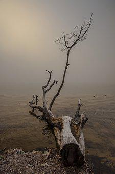 Tree, Nature, Dawn, No One, Landscape, Water, Fog