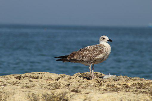 Bird, Sea, Nature, Water, Living Nature, Beach, No One
