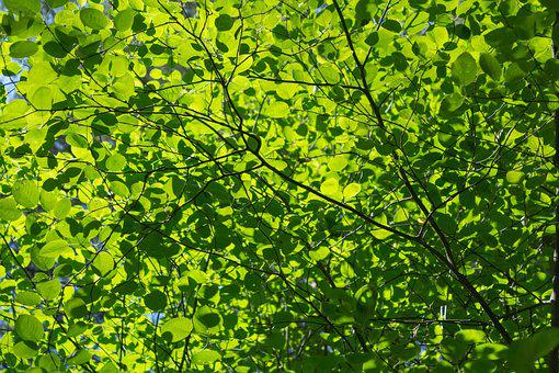 Sheet, Plant, Nature, Tree, The Crown, Leaves, Greens