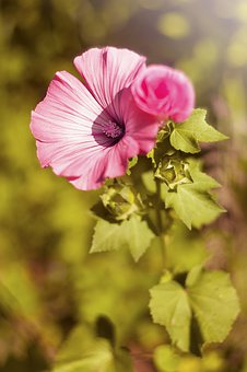 Flower, Nature, Plant, Sheet, Petal, Summer, Garden