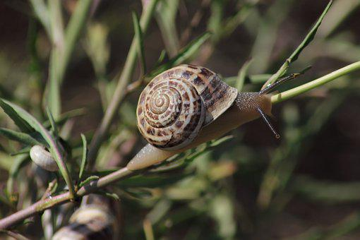 Snail, Slow, Whelks, Nature, Clam, Slimy, Shell