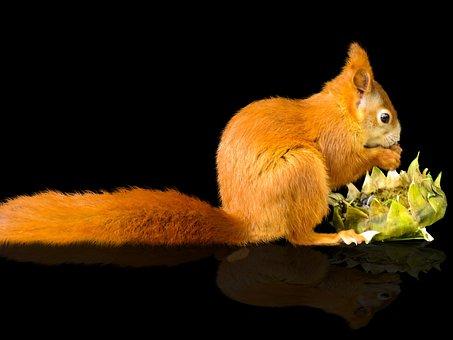 Animals, Nager, Squirrel, Animal World, Mammal, Cute