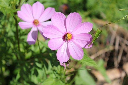 Nature, Flower, Flora, Summer, Garden