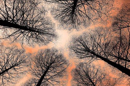 Tree, Tree Top, Trunk, Conifer, Rising Up, Tall Tree