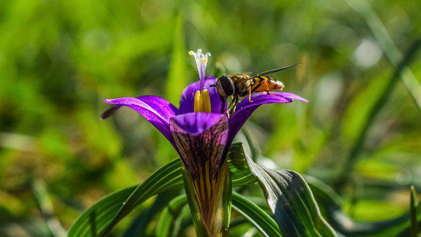 Flower, Petals, Stamens, Nature, Flora, Insect, Wasp