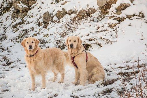 Animal, Snow, Dog, Cute, Nature, Pet, Winter, Mammal