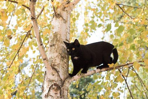 Kitten, Cat, Black Cat, Wood, Nature, Outdoors, Animal