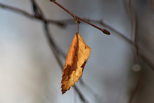 Outdoors, Nature, No One, Sheet, Insect, Plant, Autumn