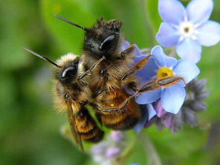 Nature, Flower, Insect, Plant, Bee, Wild Bee, Osmia