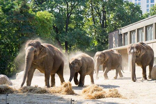 Nature, Animal World, Mammal, Elephant, Animal, Zoo