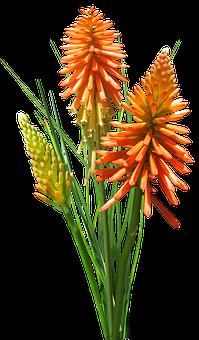 Nature, Flora, Disjunct