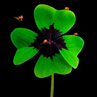 Nature, Luck, Symbol, Four Leaf Clover, Lucky Clover