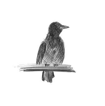 Figure, Bird, Monochrome, Illustration, From The Hand