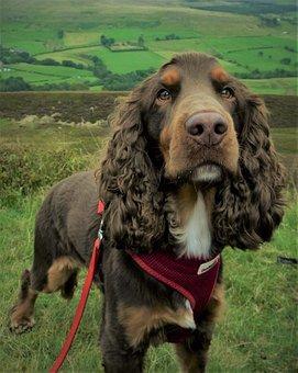 Dog, Mammal, Canine, Animal, Pet, Portrait, Puppy