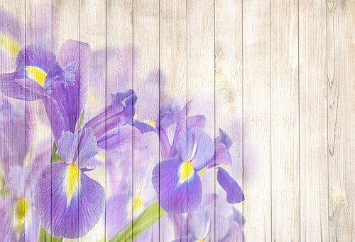 Lily, Royal Lily, On Wood, Playful, Romantic, Fresh