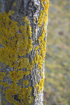 Tree, Nature, Wood, Spring, Weave, Yellow, Texture
