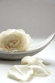 Rose, White, Still Life, Blossom, Bloom, White Roses