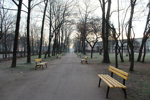 Wood, Tree, Bench, Road, Park, Nature, Outdoors