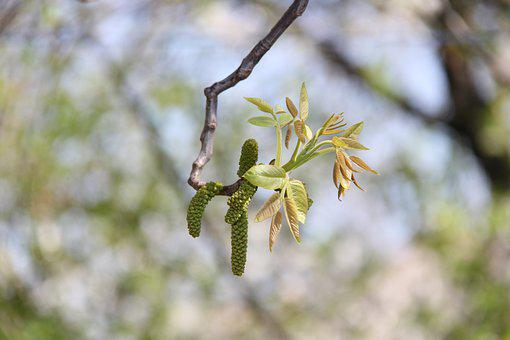 Tree, No One, Nature, Bud, Spring