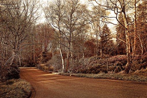 Lane, Park, Landscape, Tree, Shrub, Design, Scenic