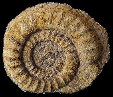 Fossils, Petrification, Ammonites, Cephalopods