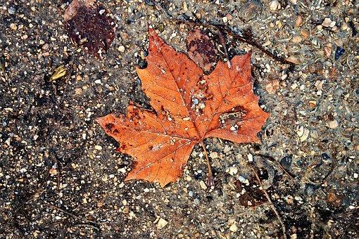 Leaf, Autumn Leaf, Autumn Colors, Surface, Path, Soil