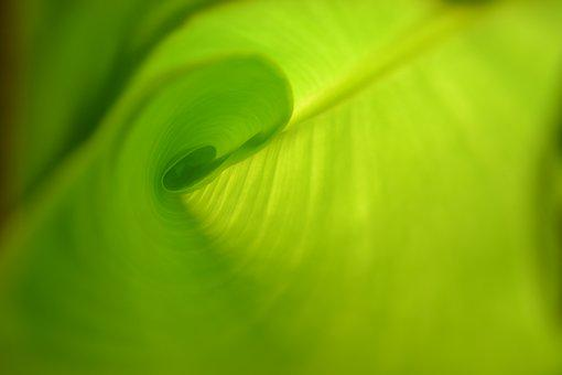 Leaf, Green, Grow, Line, Arch, Curved, Bananas