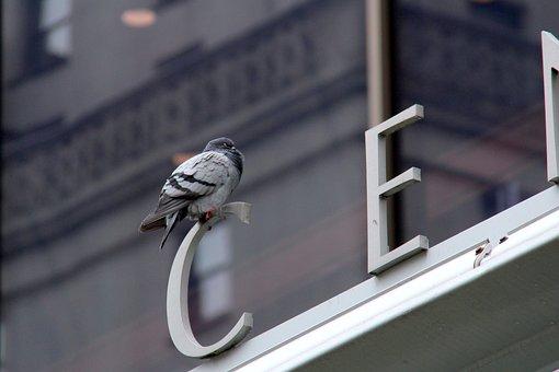 Steel, Architecture, Modern, Business, Window, Urban