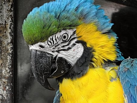 Yellow Macaw, Ara, Bird, Parrot, Colorful, Side, Detail