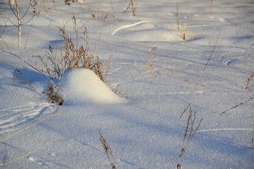 Winter, Snow, Field, Nature, Footprints In The Snow
