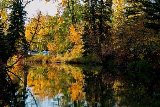 Tree, Nature, Fall, Wood, Leaf, Landscape, Season, Park