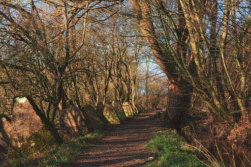 Tree, Nature, Landscape, Wood, Away, Armor Lock