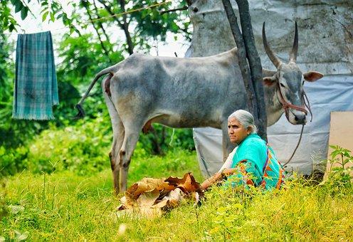 Grass, Nature, Animal, Farm, Field, Mammal, Rural
