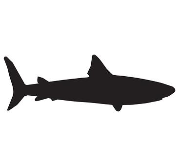 Shark, Sea, Fish, Ocean, Underwater, Animal, Marine