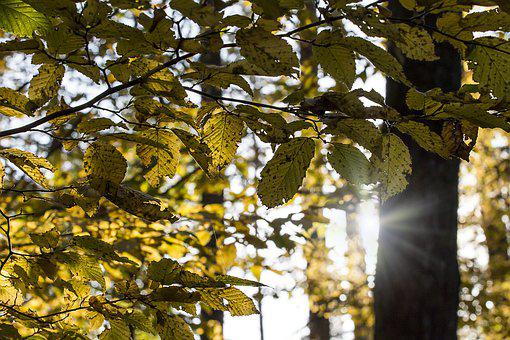 Forest, Shine, Sun, Nature, Tree, Light, Rays, Sunshine