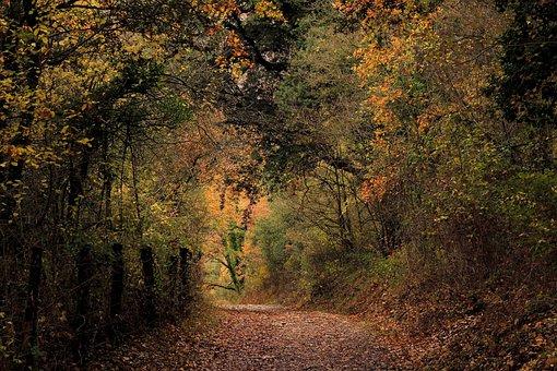 Nature, Autumn, Leaf, Tree, Wood, Forest, Trail, Path