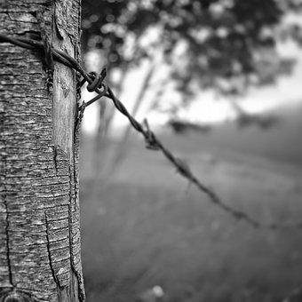 Tree, Nature, Wood-fibre Boards, Outdoor, Monochrome